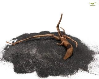 Moorkien Wurzel