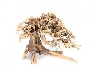 Mushroom Bonsai Garnelenbaum für Aquascapes