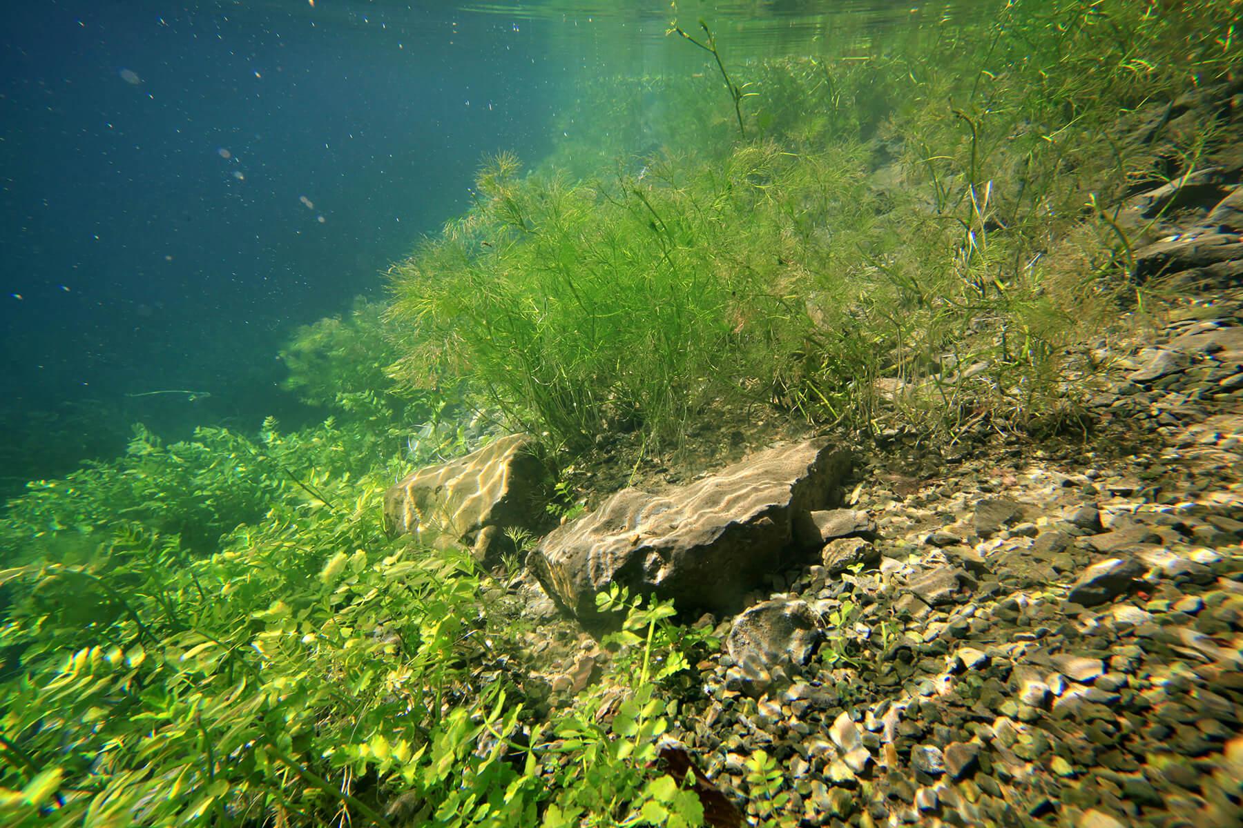 Wie tief soll ein Teich sein   Blog   Teichzeit.de   Aquaristik, Teichzubehör und Co