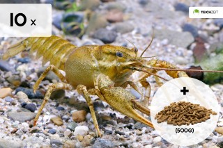 10 x Galizische Sumpfkrebse + Teich Krebsfutter 500g - Pontastacus leptodactylus