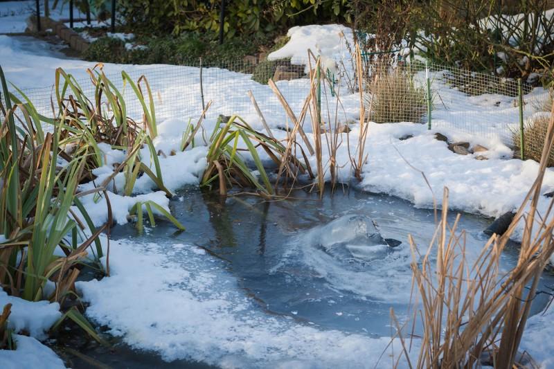 gartenteich-im-winter