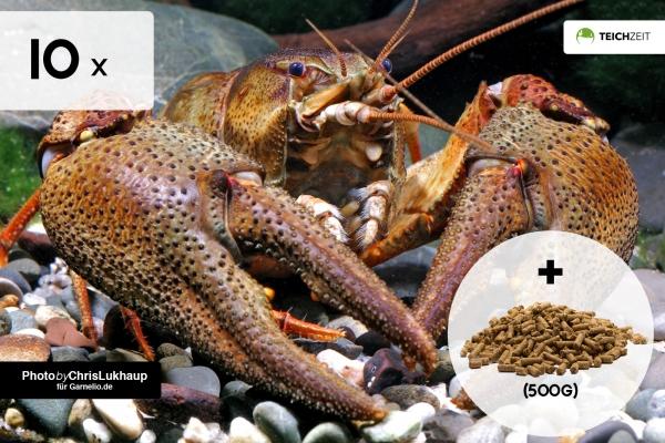 10 x Edelkrebs + Teich Krebsfutter 500g - Astacus astacus